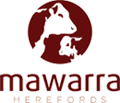 Mawarra Herefords